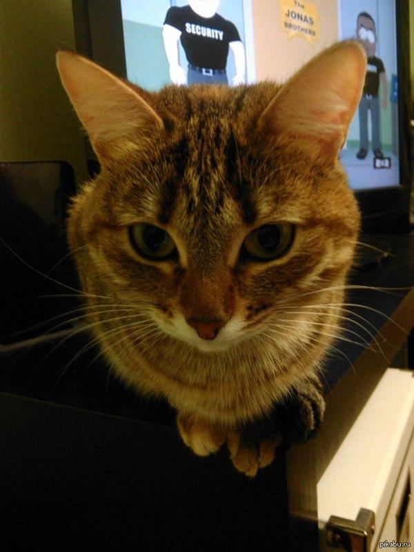 Чудо-юдо-шаро-кот) Моя кошка с завистью наблюдала как я ем поп-корн)  Пикабу ведь любит котиков?