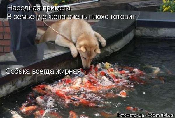 Народная примета жизнь собачья