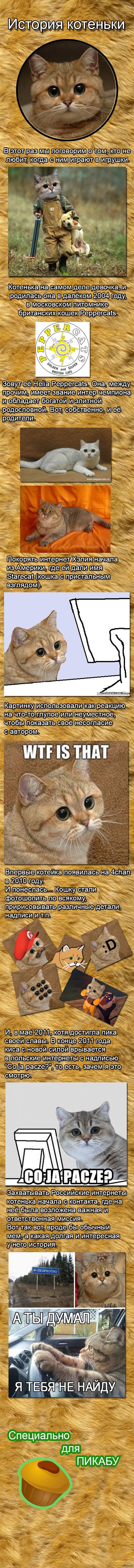 История котеньки