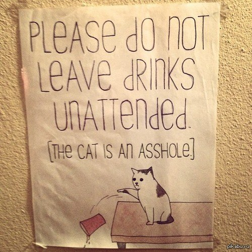 My cat drinks a lot and pees a lot