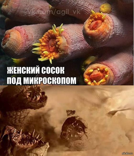zhenskaya-zadnitsa-pod-mikroskopom-porno-muzhchini-drochat-zhopu
