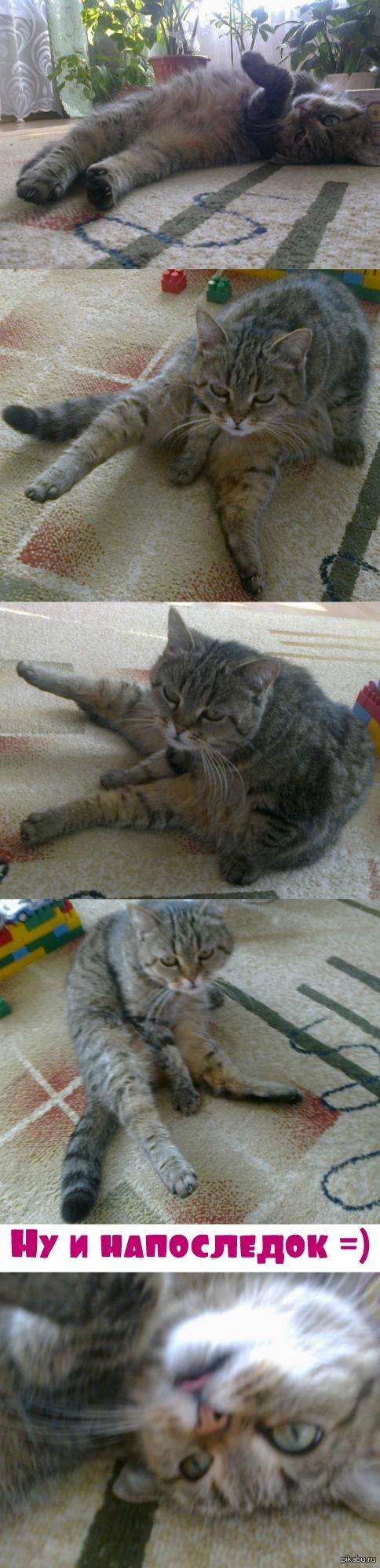 """Украина, Поклонская, олимпиада... вот вам мой упоротый кот =) Моей кошке 14 лет. Иногда она вот так """"зависает"""". Котолучей вам о/"""