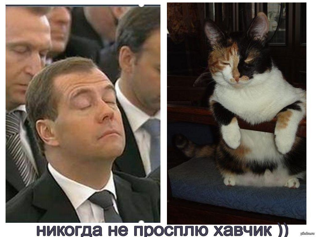 Коты в политике картинки