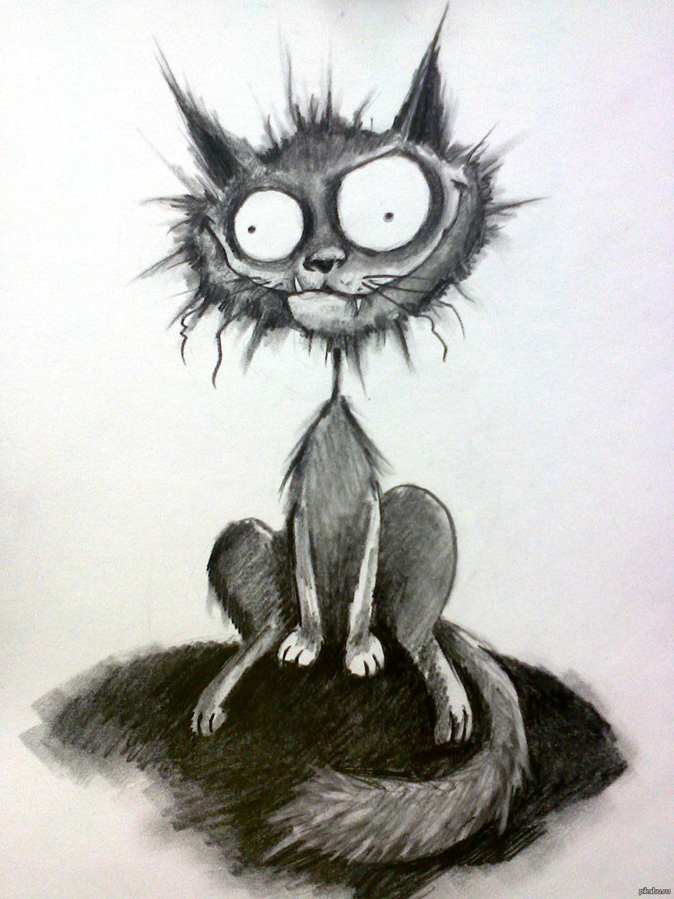 Картинки, злые коты картинки нарисованные